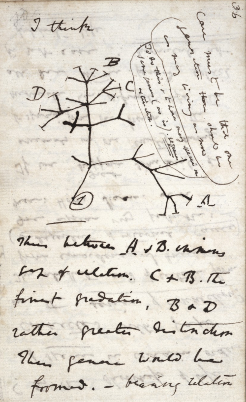 darwin_tree_notebook_crop